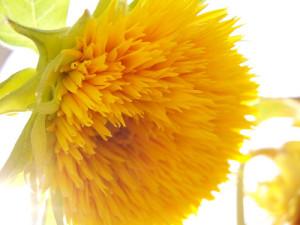 Spirit-flower